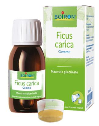 Immagine di FICUS CARICA GEMME MACERATO GLICERINATO 60 ML INT